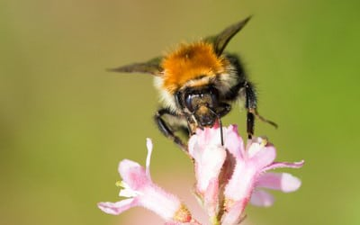Biodiversiteit in beeld